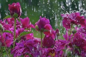 plumber-near-saint-paul-minn-spring-showers