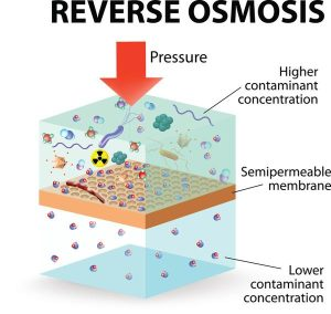reverse osmosis use the membrane to act like an extremely fine filter to create drinking water from contaminated water. Pressure is applied to the contaminated water forcing water molecules through the membrane. solvent moves from a solution of greater concentration through a membrane to a solution of lesser concentration.