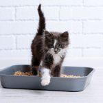 plumbing-st-paul-mn-kitty-litter